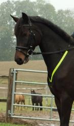 Reflexní poprsník pro koně